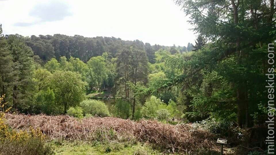Rushmere country park view
