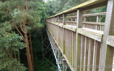Tree top Trail at Salcey Forest, Forestry Commission