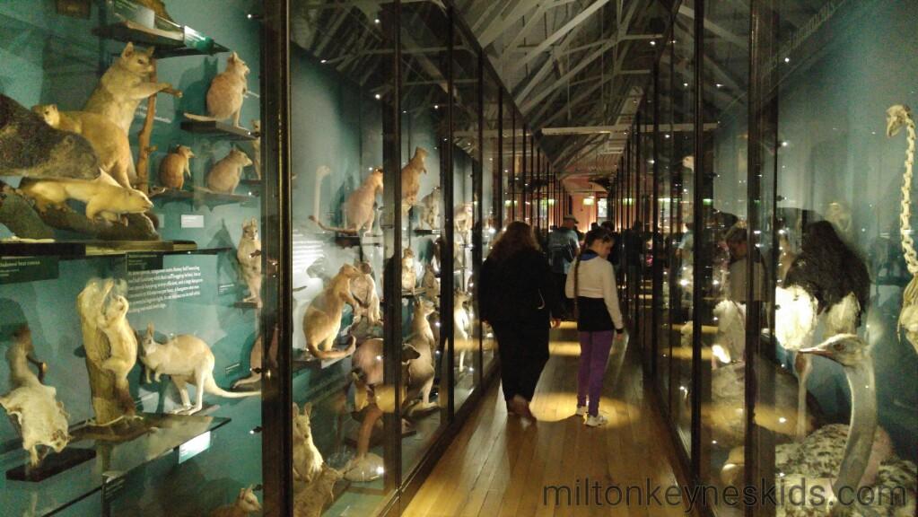 Tring Museum