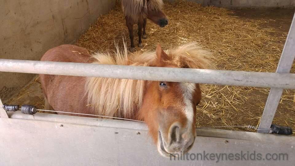 Green dragon eco farm pony