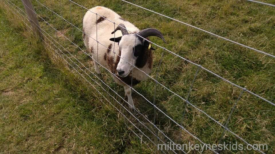 Green dragon eco farm goat