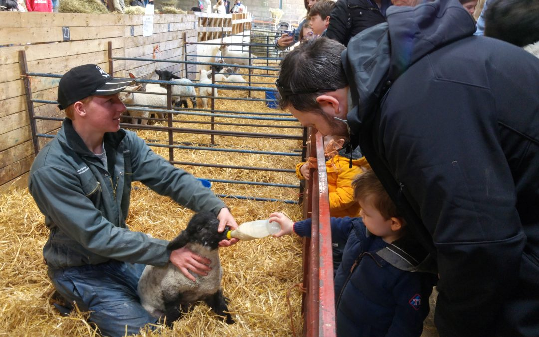 Lambing days for Milton Keynes Kids 2017