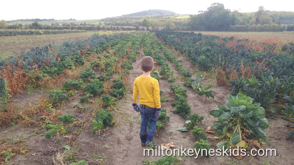 Fruit and vegetable picking Grove Farm, Bedfordshire