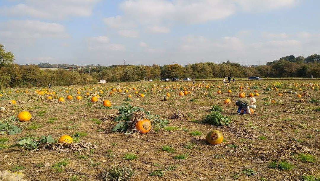 Pick your own pumpkins – The Pop Up Farm in Hertfordshire
