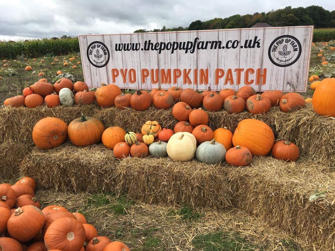 Pop up Farm, Hertfordshire