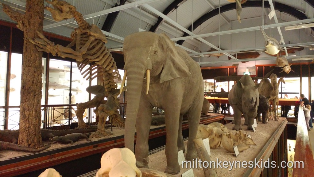 Taxidermy elephant at the museum of natural history in Tring