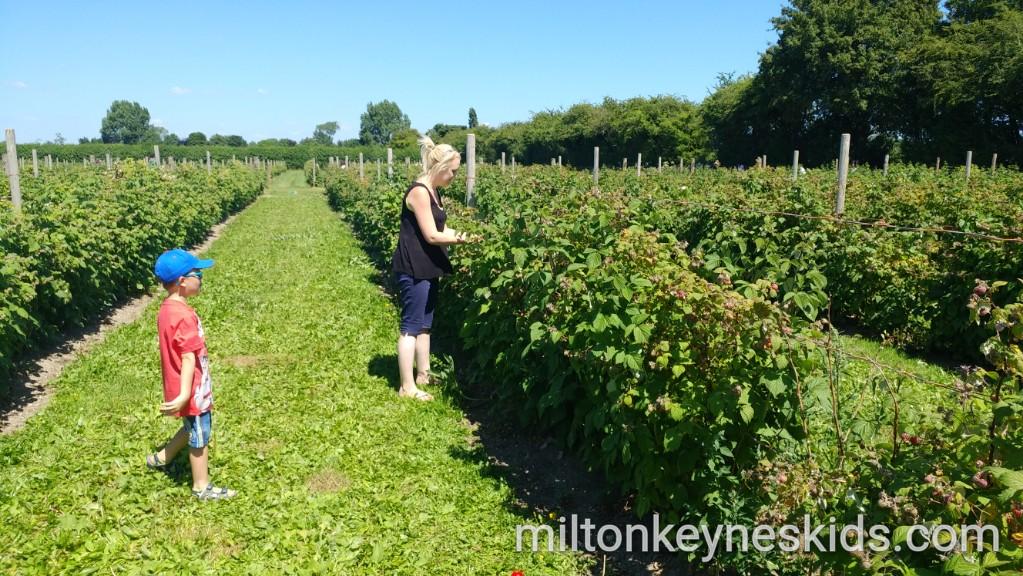 Grove Farm Pick Your Own