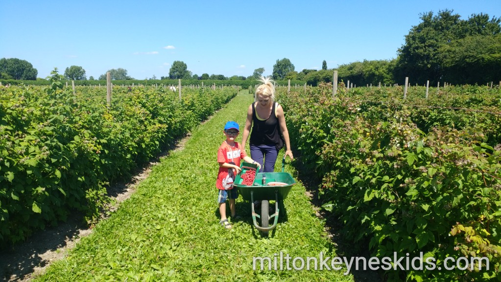 Pick your own fruit Grove Farm, Bedfordshire