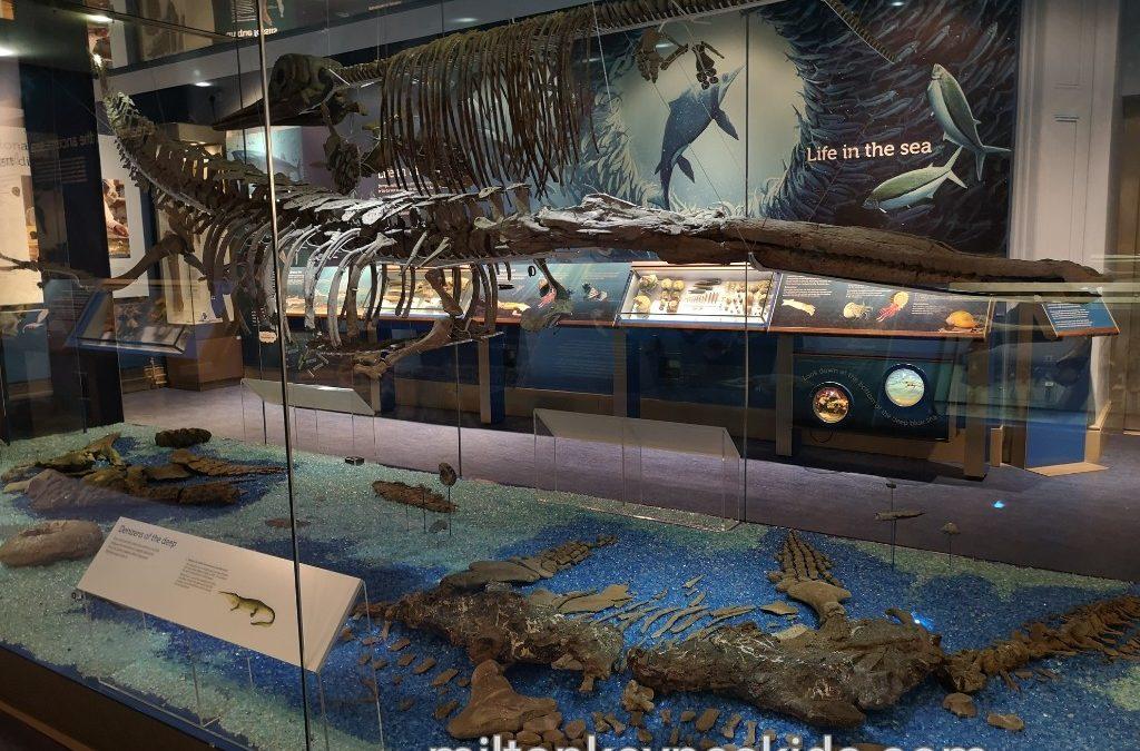 Prehistoric sea creatures in Peterborough Museum
