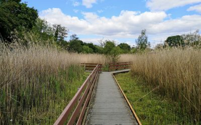 Boardwalk to the bird hide at Walton Lake in Milton Keynes