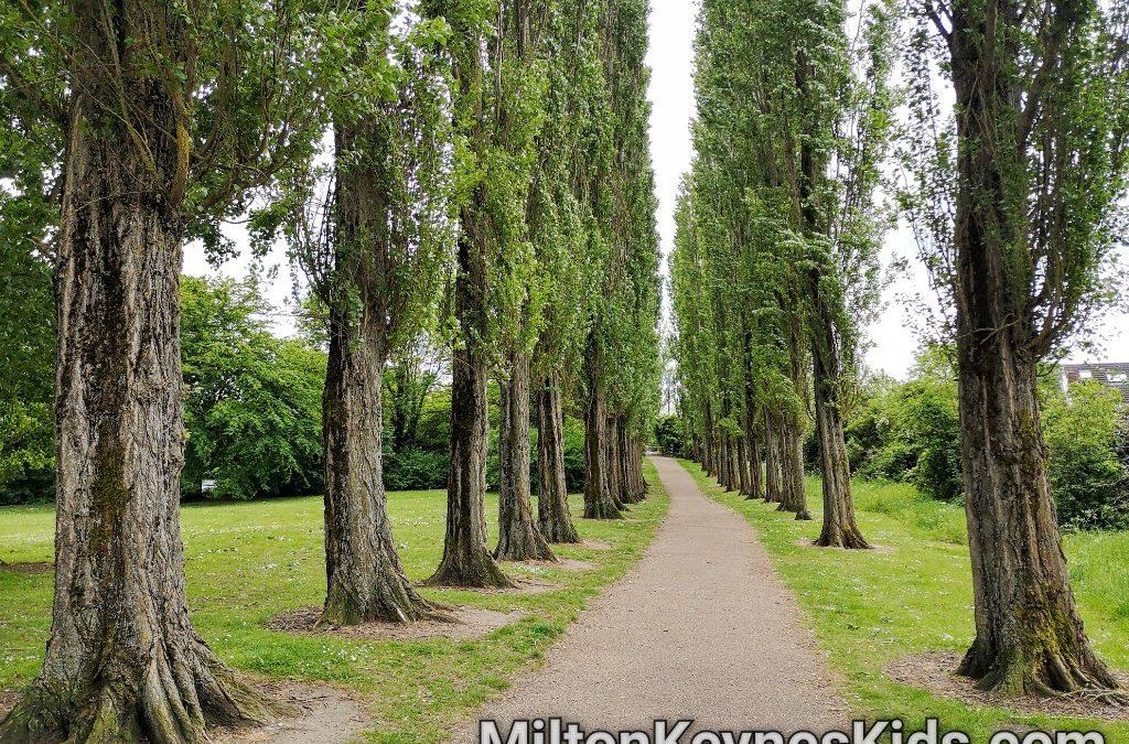 Poplar trees at Waterhall Park
